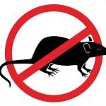 anti-rato